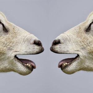 דיבור לריב – מה הקשר בין הזרת שלנו ליכולת שלנו לתקשר