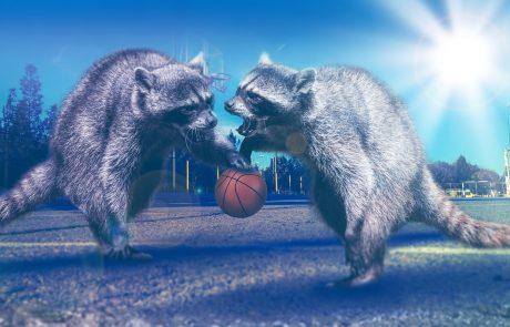 גישור בספורט – מה הקשר בין אגדת פסח לסכסוך בכדורסל